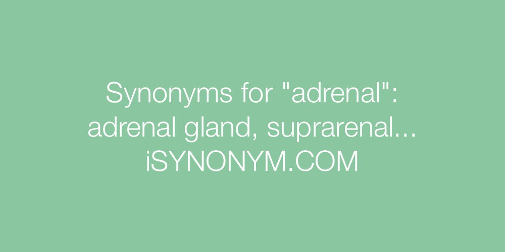 Synonyms adrenal