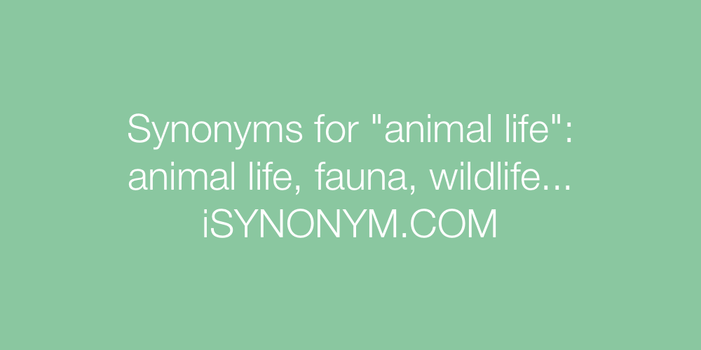 Synonyms animal life