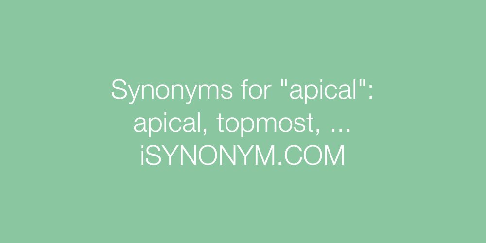 Synonyms apical