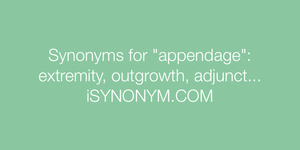 Synonyms appendage
