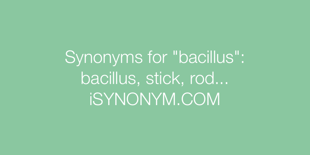 Synonyms bacillus