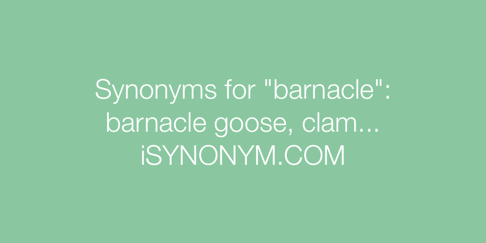 Synonyms barnacle