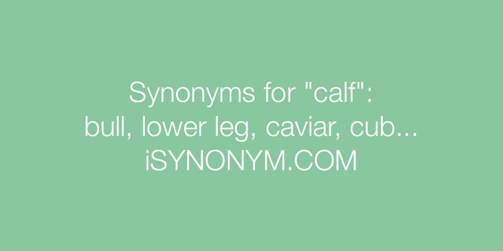 Synonyms calf