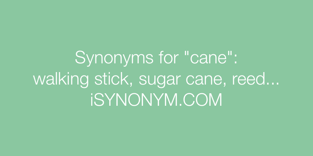 Synonyms cane