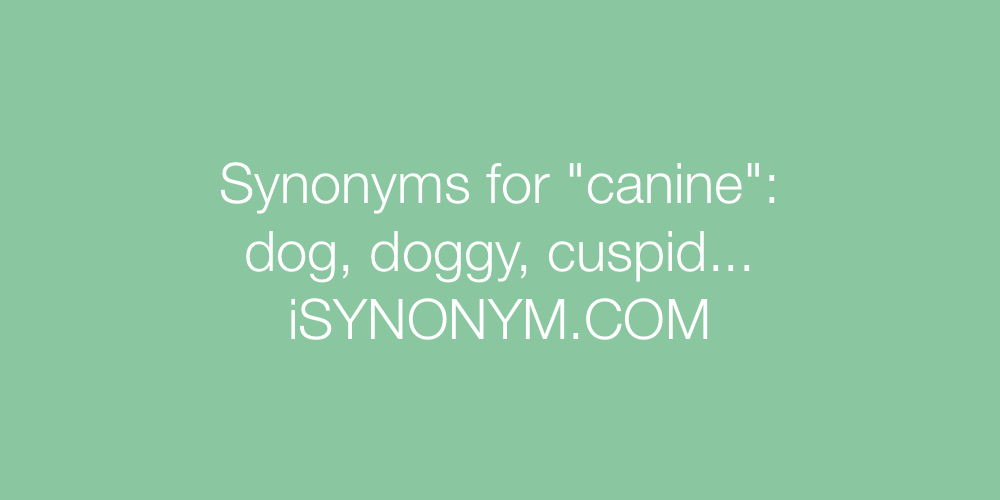 Synonyms canine