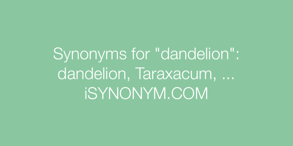 Synonyms dandelion