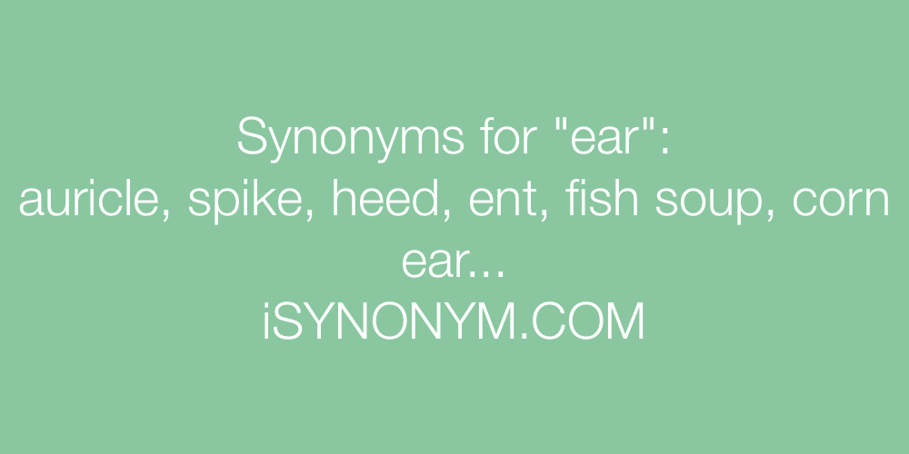 Synonyms ear