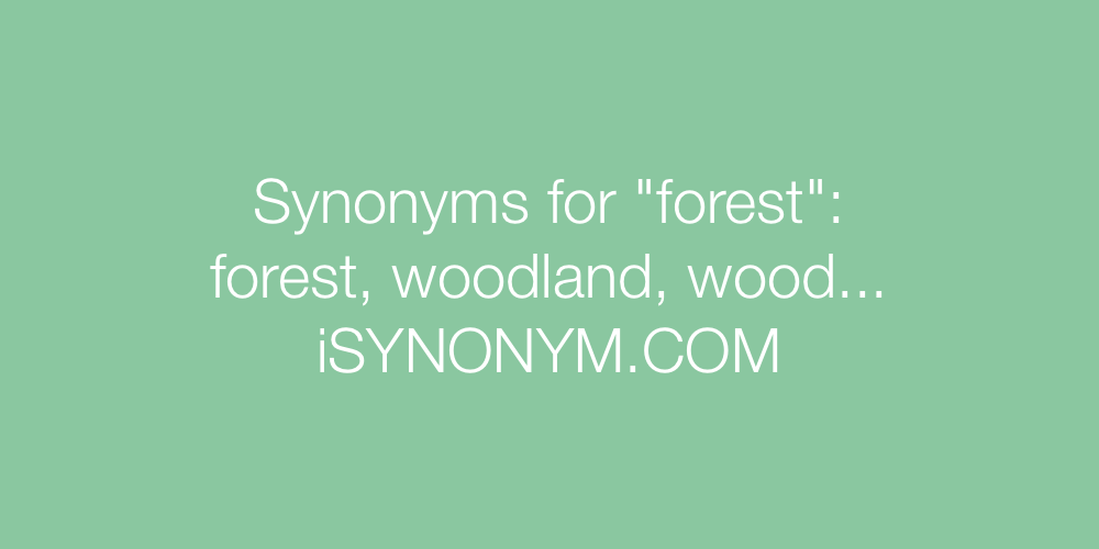Synonyms forest