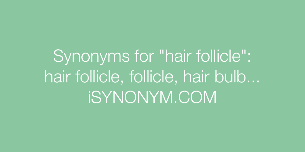 Synonyms hair follicle