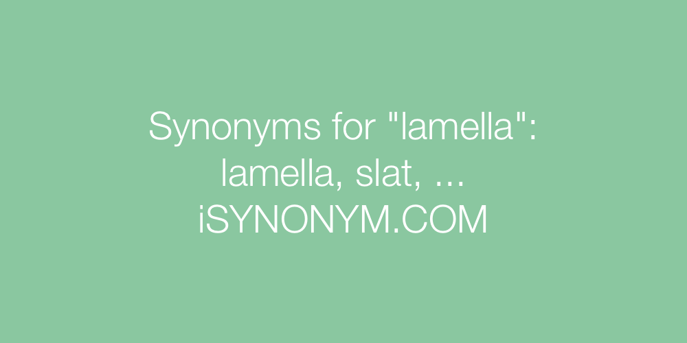Synonyms lamella