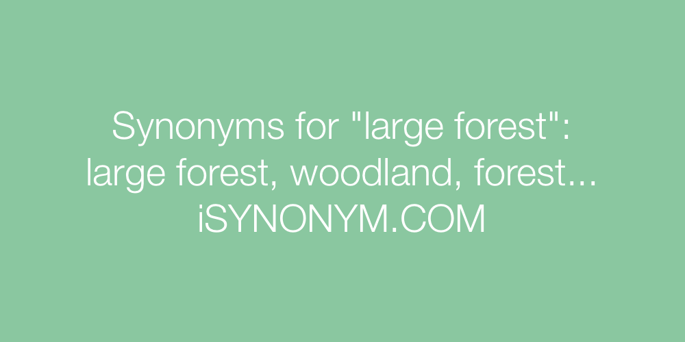 Synonyms large forest