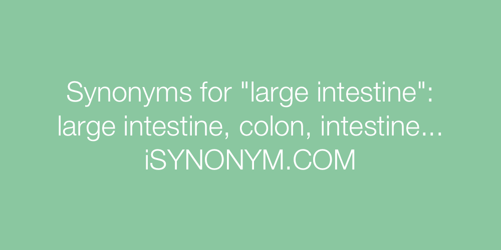 Synonyms large intestine