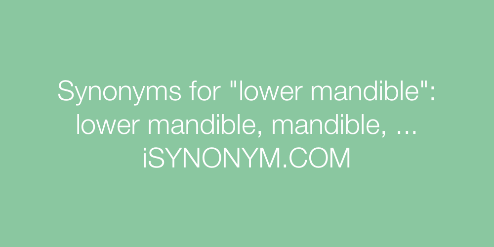 Synonyms lower mandible