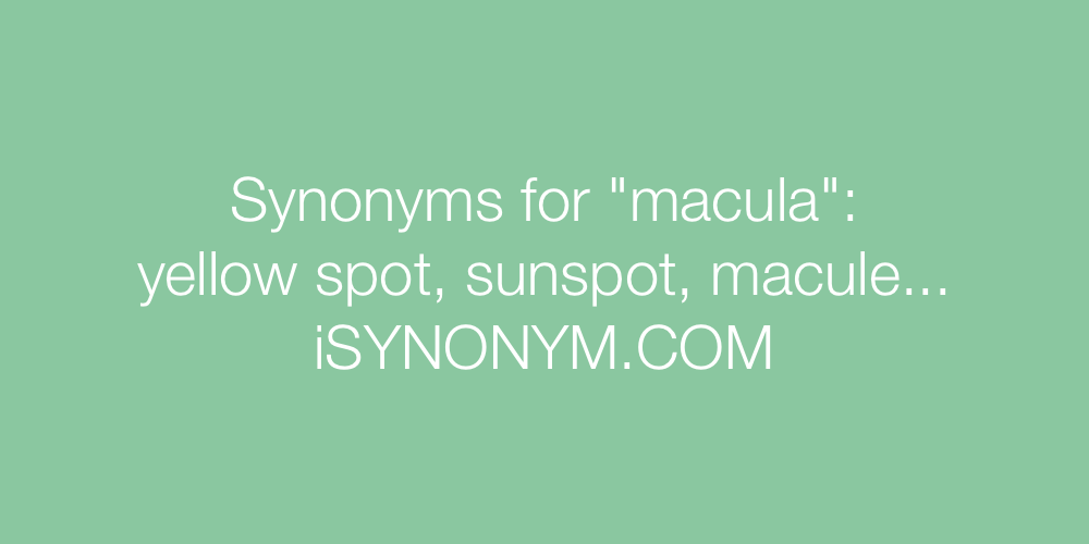 Synonyms macula