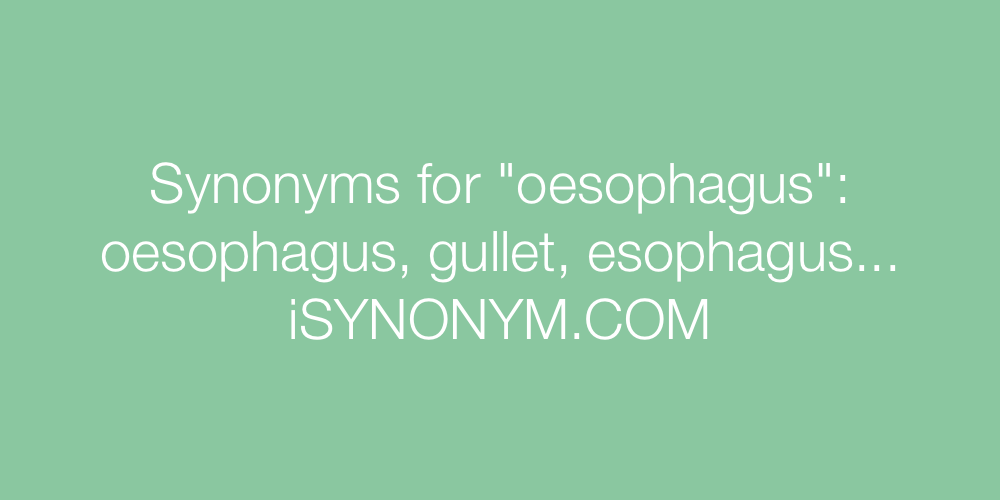 Synonyms oesophagus