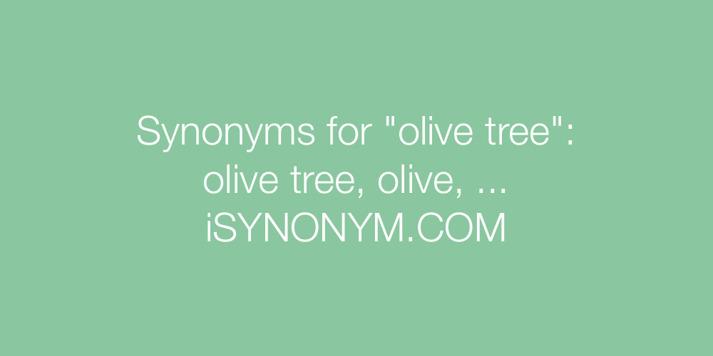 Synonyms olive tree