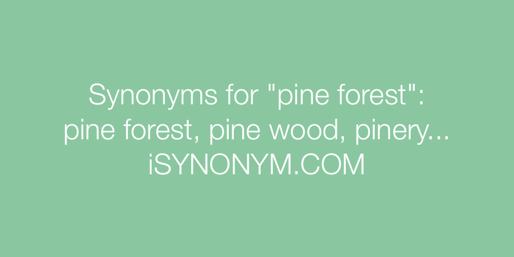 Synonyms pine forest