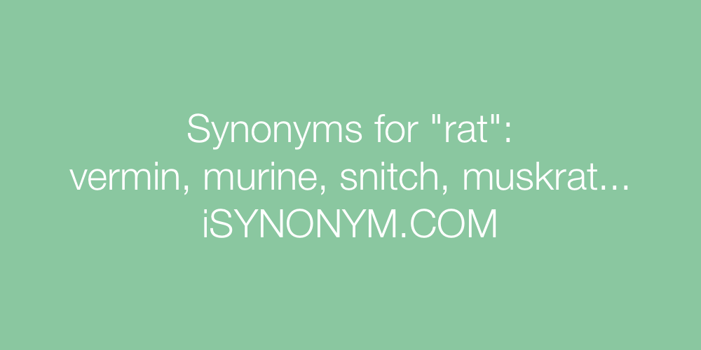 Synonyms rat