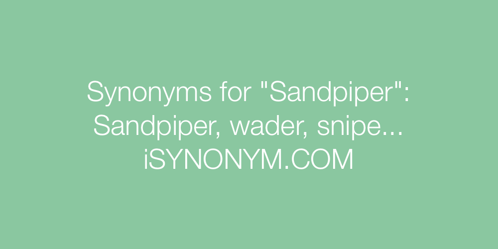 Synonyms Sandpiper