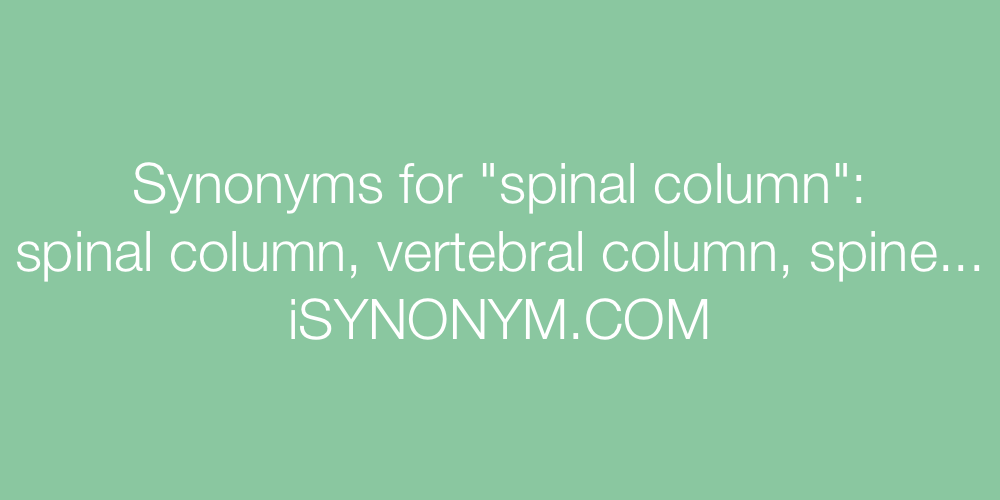 Synonyms spinal column