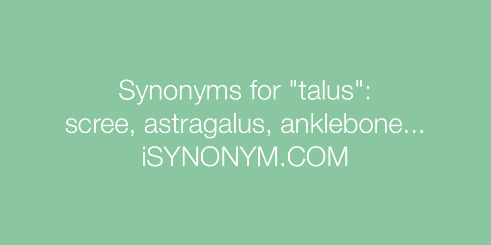 Synonyms talus