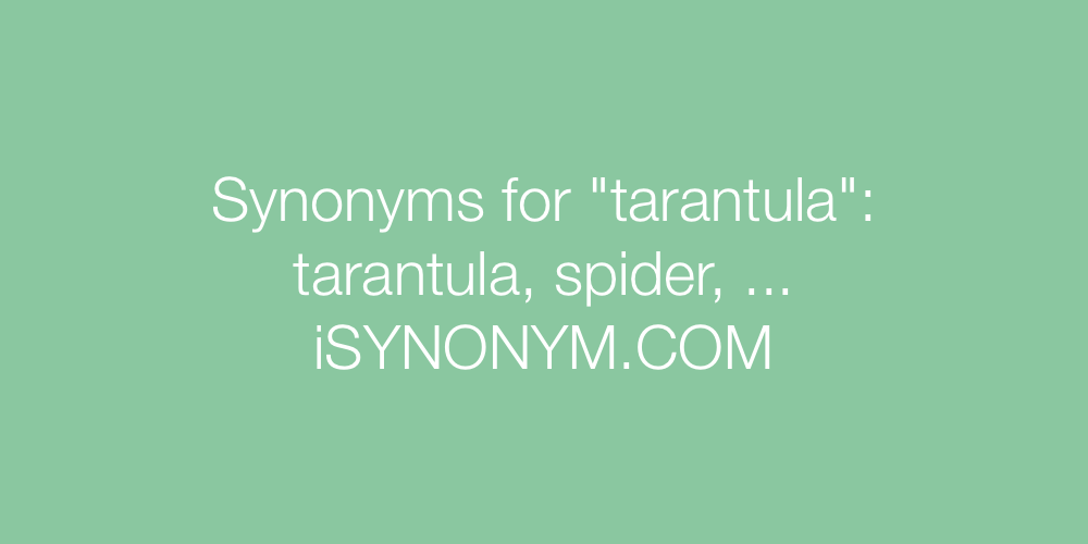 Synonyms tarantula
