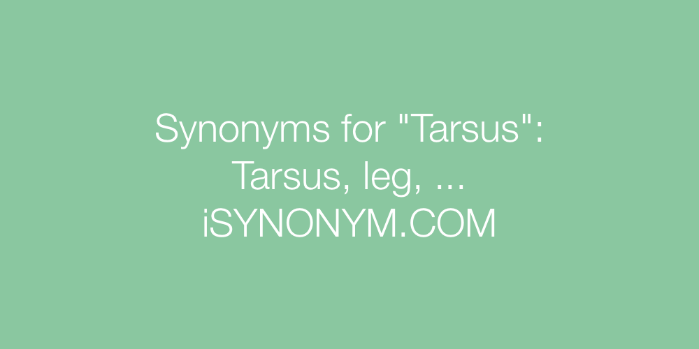 Synonyms Tarsus