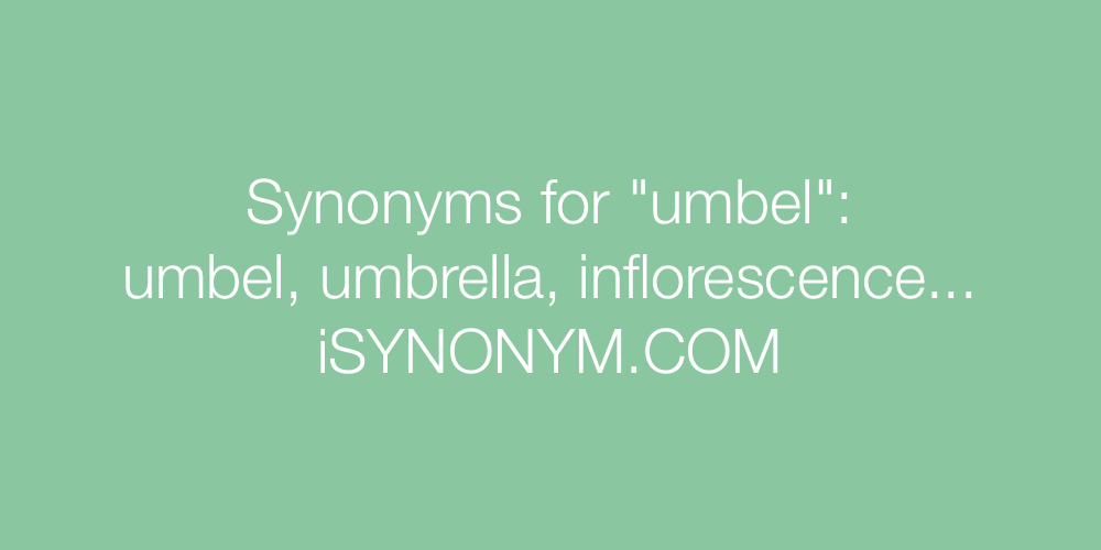 Synonyms umbel