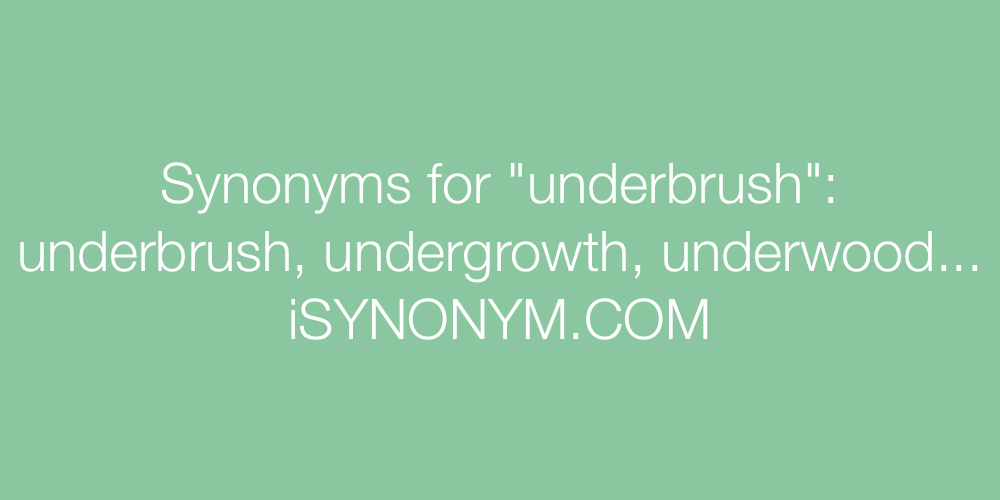 Synonyms underbrush