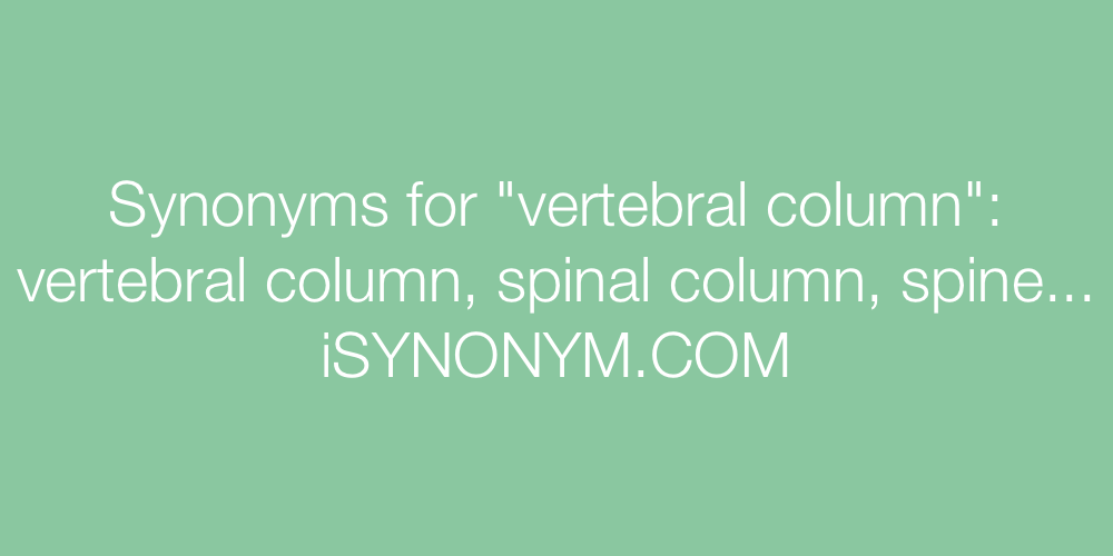 Synonyms vertebral column