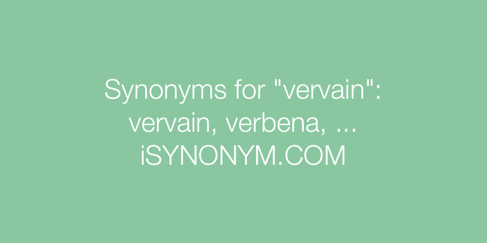 Synonyms vervain