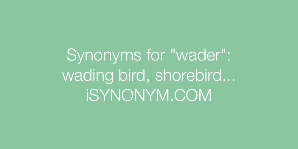 Synonyms wader