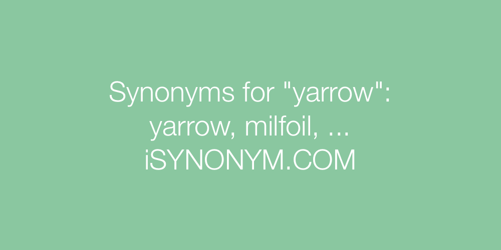 Synonyms yarrow