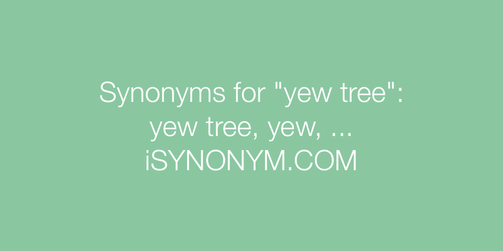 Synonyms yew tree