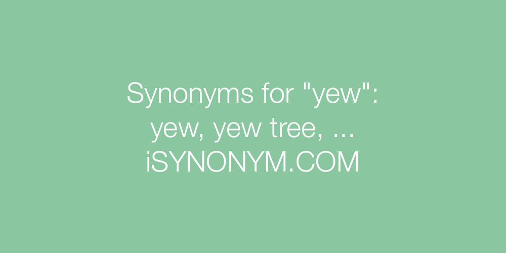 Synonyms yew